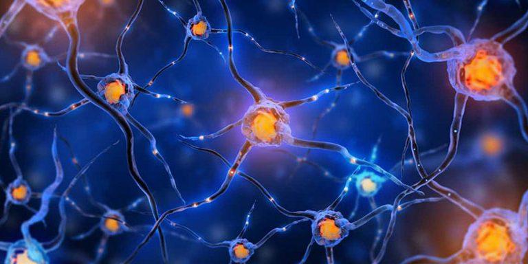 Efectos del consumo de cocaina en el cerebro