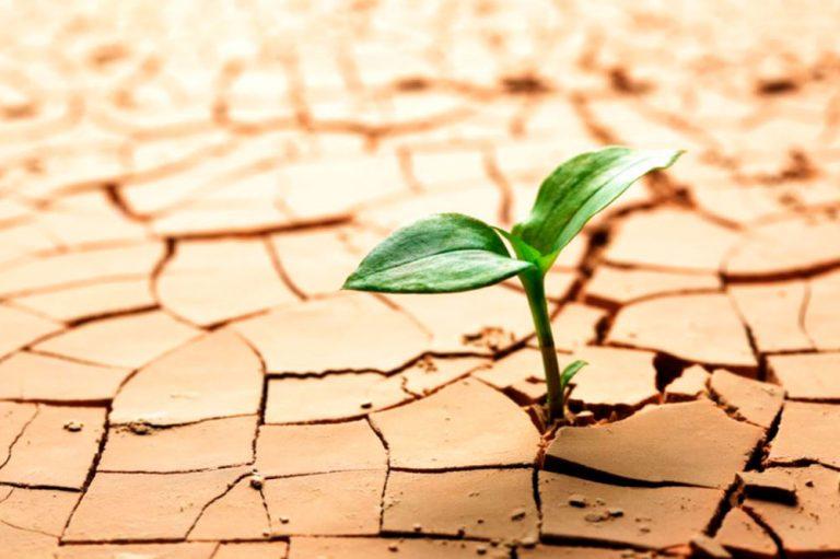 """El concepto de """"resiliencia"""" en salud mental"""