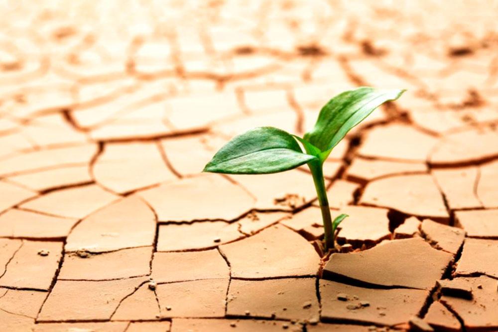 El concepto de la resiliencia en salud mental